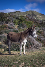Donkey Standing In A Field, Strait Natural Park, Tarifa, Cadiz, Andalucia, Spain