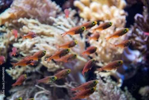 Plakat Ryba w SEA Akwarium, Singapur