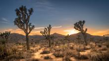 Sunset On The Desert Landscape In Joshua Tree National Park, California