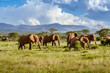 canvas print picture - Herd of elephants in the african savannah