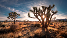 Sunset On The Desert Landscape...