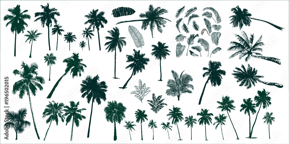Fototapety, obrazy: tropical palm trees