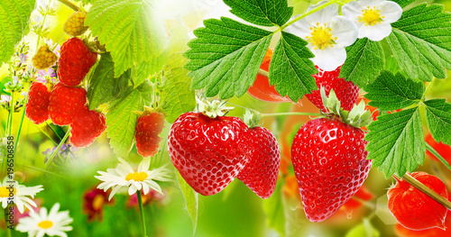 Foto op Canvas Natuur Summer garden berry