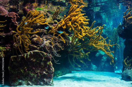 Staande foto Koraalriffen underwater coral reef landscape background in the blue sea