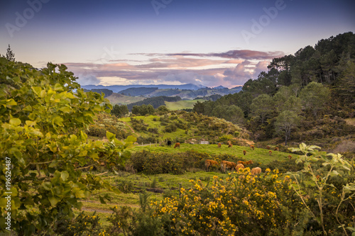 Overlooking a pasture as the sun sets spectacularly over Cathedral Cove on the Coromandel Peninsula on the North Island of New Zealand near Auckland.