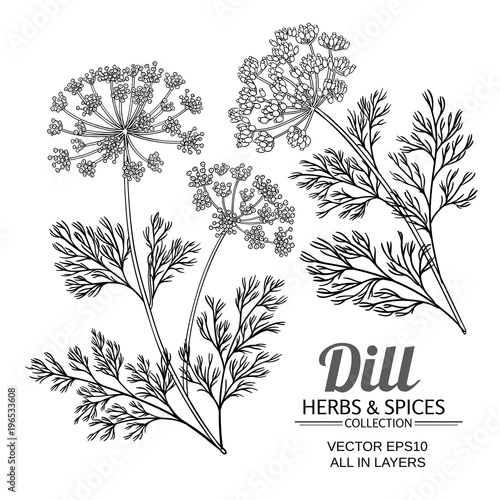 Leinwand Poster dill plant vector set