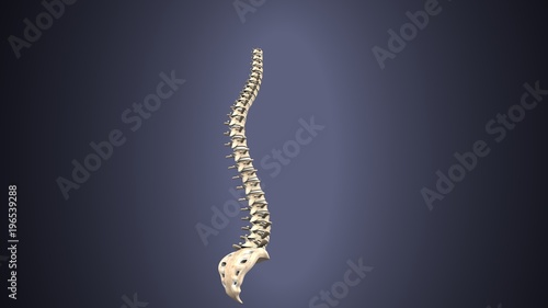 3d render of Human Spinal Anatomy Canvas Print