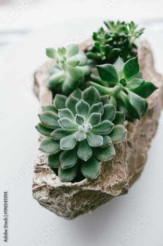 home indoor plants: Aloe cactus succulent plant  small