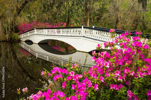 Photo  Charleston South Carolina Spring Flowers Blooming SC