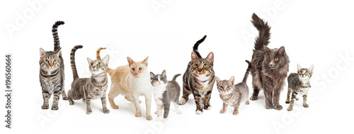 Row of Cats and Kittens Horizontal Web Banner Wallpaper Mural