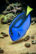Famous Aquarium Fish Palette S...