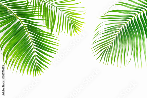 Tuinposter Palm boom Palm leaves isolated on white background