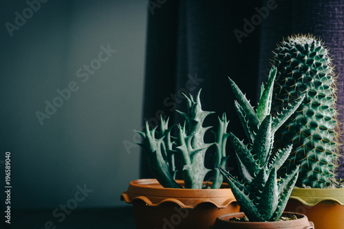 Photo green cactus on table