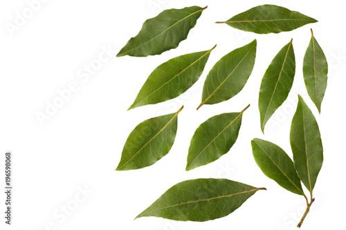 Fototapeta Laurel leaves isolated on a white background obraz na płótnie