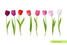 Big Isolated Tulips Flowers Set