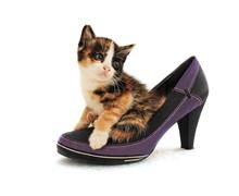 Tortie Cat Is Sitting In Women's Shoes