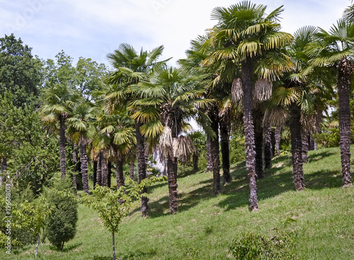Staande foto Tuin Arboretum of tropical and subtropical plants.