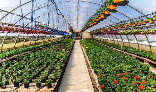 Fotomural Serra per piante fiorite
