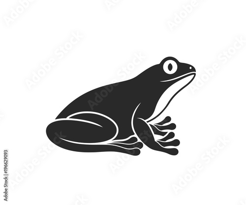 Photographie Red eye frog. Tree frog. Isolated frog on white background