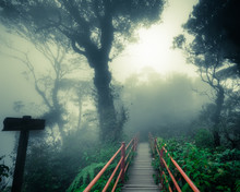 Mysterious Foggy Forest With Wooden Bridge And Signpost