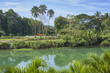 Beautiful scenic river on the tropical landscape