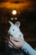 Young cute white rabbit holding by young woman