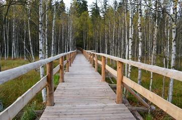 Drewniany pomost przez las, rezerwat torfowisko pod Zieleńcem, Polska
