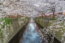 Beautiful Cherry Blossom Sakura At Meguro River In Tokyo Japan