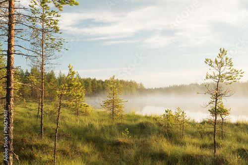 Foto op Canvas Bomen Misty pond landscape