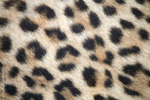 Tuinposter Luipaard Leopard print close up