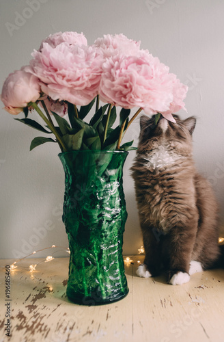 A Kitten Standing Next To A Vase Of Pale Pink Peonies Buy This