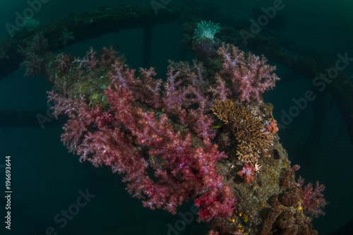 Beautiful coral grow on the wreck ship underwater