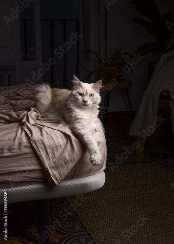 Cute cat in the bed