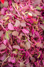 Red Amaranth Greens