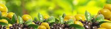Fresh Olives