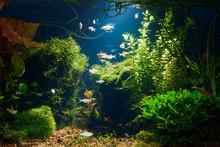 Underwater Jungle In Tropical ...