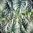 Tropical leaves background. Monstera leaf texture or pattern