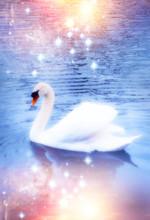 A Swan In Magic Light On Mysti...