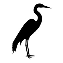 Vector Image Of The Silhouette Of The Birds Of The Heron