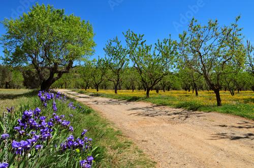 Iris au bord d'un sentier de randonnée