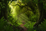 Fototapeta Forest - Asian tropical rainforest