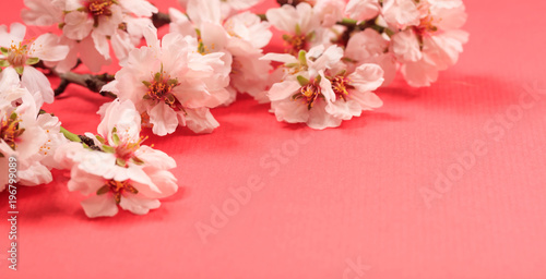Photo  Spring blooming