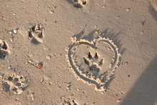 Dog Footprind On Wet Sand And Heart Around It