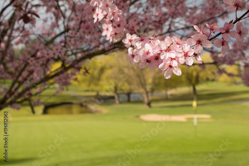 Fotografie, Obraz  Spring Golf Course Pond and Sand Trap