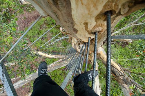 Fotografie, Obraz  Gloucester Tree Climb - Pemberton - Australia