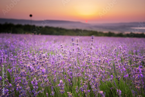 Tuinposter Zalm Meadow of lavender.