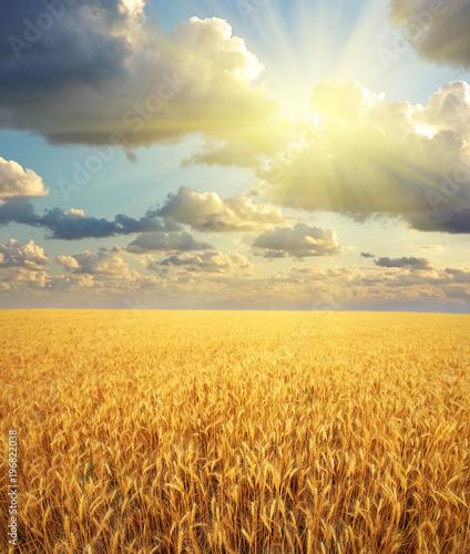 Spoed Fotobehang Meloen Meadow of wheat