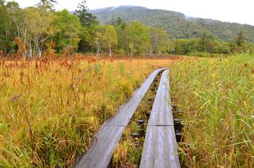 秋の尾瀬ヶ原