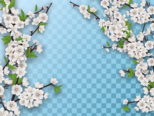 Set Of Spring Blooming Fruit Tree Branches. White Flowers And Green Leaves On A Branch. Element For A Spring Greeting Card. Isolated On A Transparent Background.