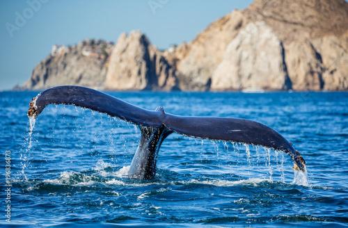 Fototapeta premium Ogon humbaka. Meksyk. Morze Corteza. Półwysep Kalifornijski. Doskonała ilustracja.